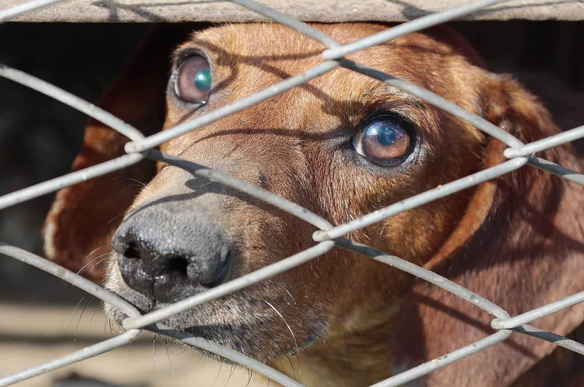 dachshund-2683905_1920
